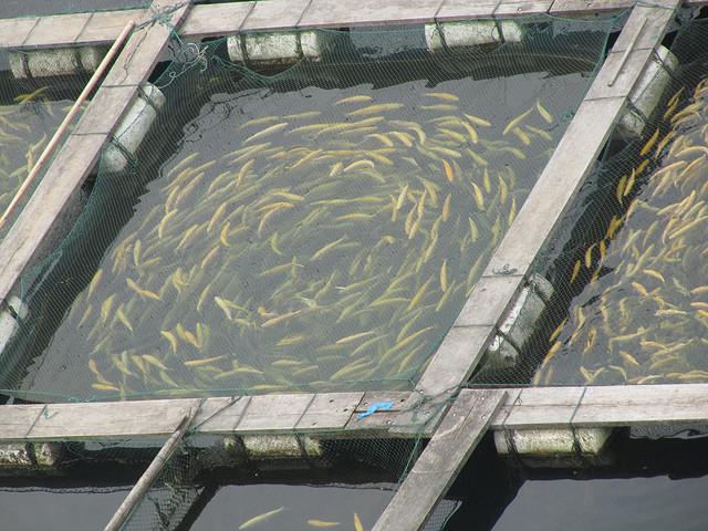 Минэкологии Армении: Новый проект сэкономит воду на рыбных фермах Араратской долины